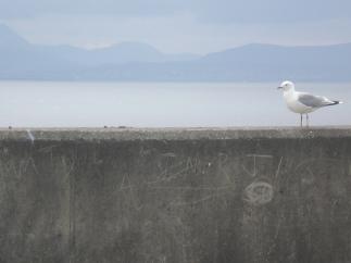 Tory Gull with Graffiti