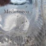 meduzoa